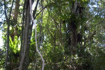 Mystery Mountain Rainforest